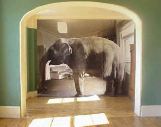 elephant_in_living_room.jpg